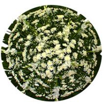 Coroa de Flores Mini
