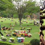 Cemitério do Morumbi