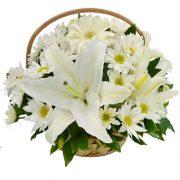 Flores Dia do Médico