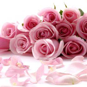 Floricultura Cesta e Flor