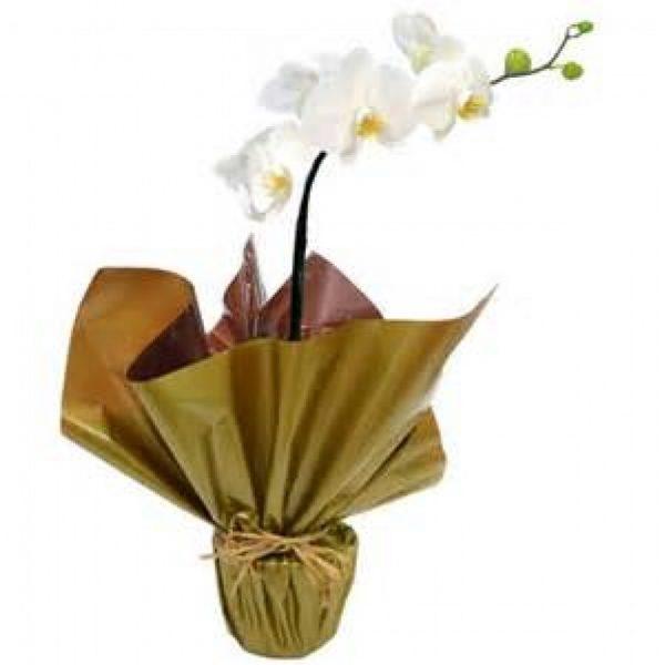 Floricultura Santa Clara - SP
