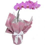 Orquidea cor de rosa