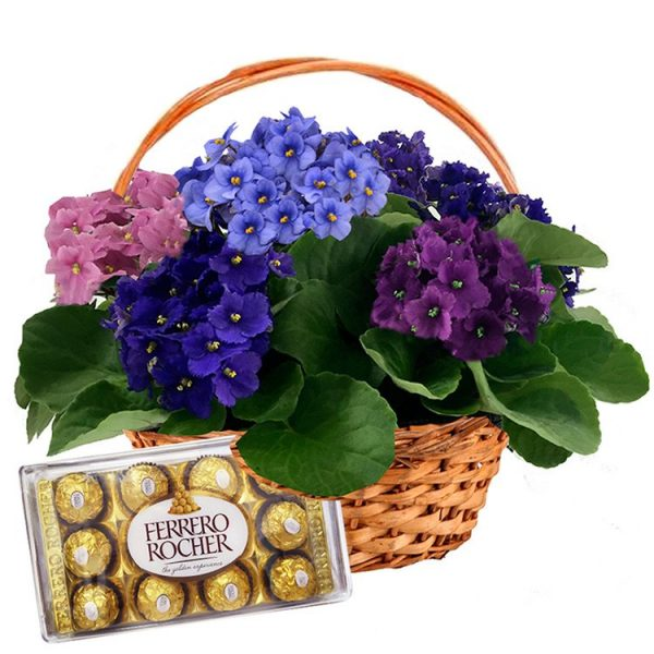 Cesta de Violetas com Ferrero